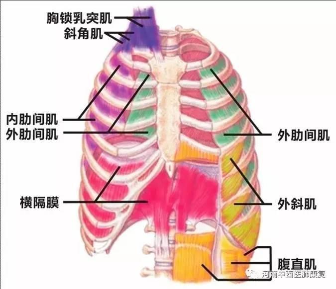 肺康复---吸气肌训练