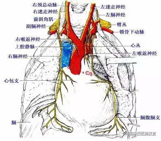 肺康复---膈肌起搏治疗