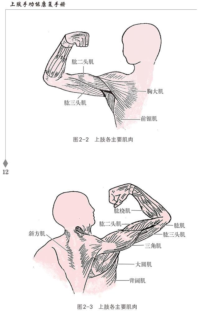 上肢手功能康复手册